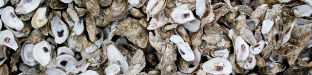 oysters-bluffton-south-carolina-2000x484