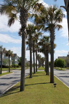 Riec Hope Palm Trees Boulevard